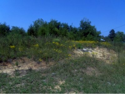 Piney Flats Residential Lots & Land For Sale: TBD Highway 11-E