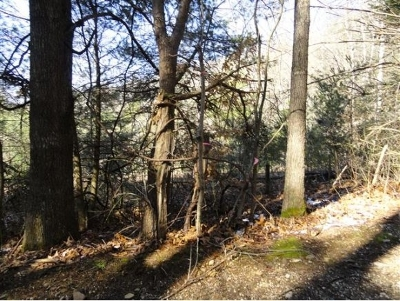 Butler TN Residential Lots & Land For Sale: $85,000