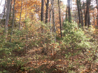 Butler Residential Lots & Land For Sale: 1981 Sink Valley Road