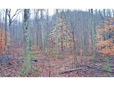 Residential Lots & Land For Sale: TBD Black Bear Ln