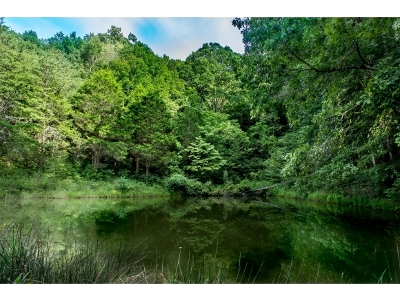 Greene County Residential Lots & Land For Sale: TBD Snake Hollow