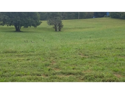 Unicoi Residential Lots & Land For Sale: Lot #3 Paydens Way