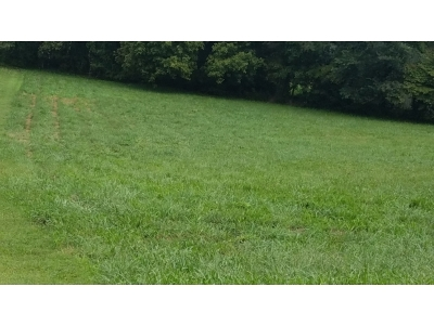 Unicoi Residential Lots & Land For Sale: Lot #3 Clearwater Drive