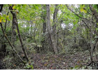 Bristol Residential Lots & Land For Sale: TBD Ruth Street