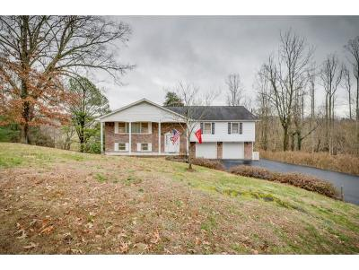 Kingsport Single Family Home For Sale: 1133 Buchelew Drive