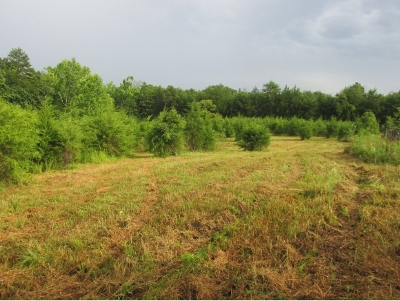 Greene County Residential Lots & Land For Sale: Carters Valley Road