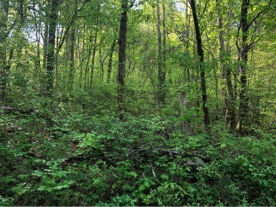 Hancock County Residential Lots & Land For Sale: 4536 Pawpaw Rd