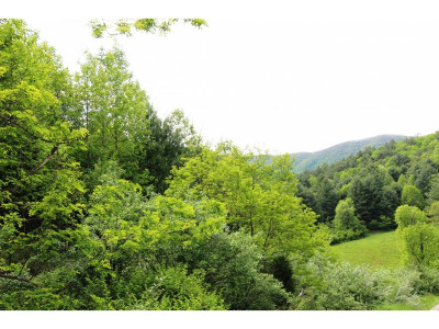 Butler Residential Lots & Land For Sale: Pine Orchard Road