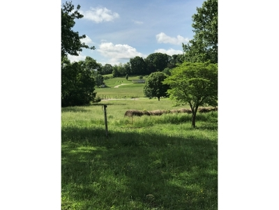Greene County Residential Lots & Land For Sale: 2155 Jockey Rd