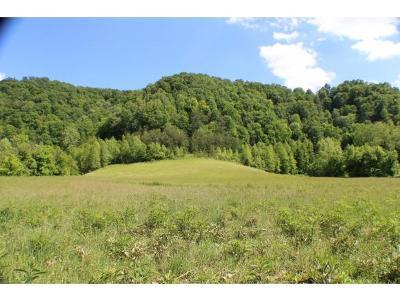 Hawkins County Residential Lots & Land For Sale: 195 Gene Derrick