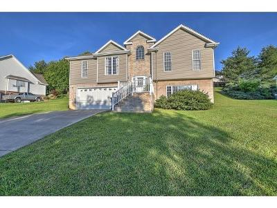 Kingsport Single Family Home For Sale: 358 Parker Lane