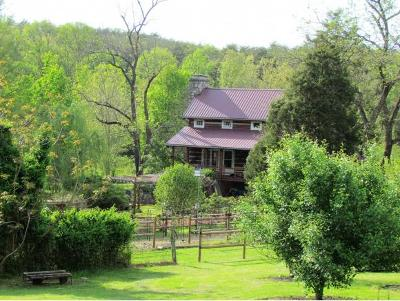 Greeneville Single Family Home For Sale: 227 Kelley Gap Rd