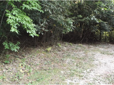 Unicoi Residential Lots & Land For Sale: TR 3 Roller Road