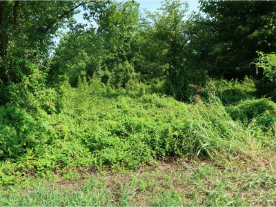 Greene County Residential Lots & Land For Sale: McMillan Rd