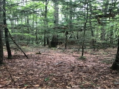 Residential Lots & Land For Sale: TBD Wilson Ln