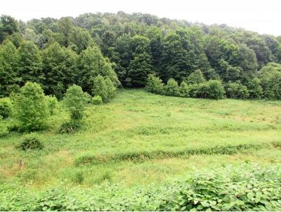 Residential Lots & Land For Sale: 638 Willow Springs Road