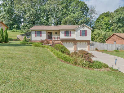 Blountville Single Family Home For Sale: 230 Cain Dr.