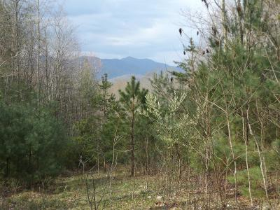 Residential Lots & Land For Sale: TBD Sink Valley Road