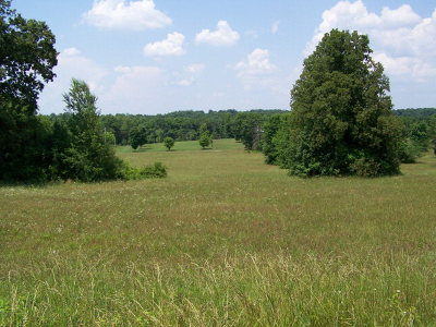 Residential Lots & Land For Sale: Peach Ave.