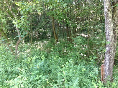 Sparta TN Residential Lots & Land For Sale: $3,500