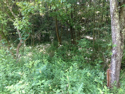 Sparta TN Residential Lots & Land For Sale: $6,500