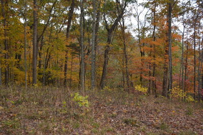 Byrdstown TN Residential Lots & Land For Sale: $21,000