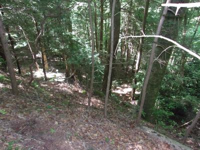 Residential Lots & Land For Sale: 5037 Wolf Branch Ln