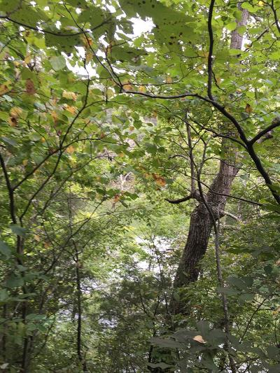 Rock Island TN Residential Lots & Land For Sale: $52,000