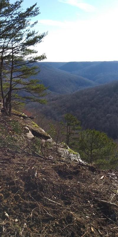 Wilder TN Residential Lots & Land For Sale: $54,900