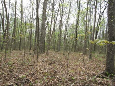 Crawford TN Residential Lots & Land For Sale: $99,000