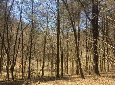 Whitleyville TN Residential Lots & Land For Sale: $139,900