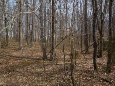 Moss TN Residential Lots & Land For Sale: $24,900
