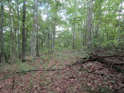 Residential Lots & Land For Sale: 5.017ac Backwoods Trails