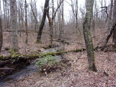 Monterey TN Residential Lots & Land For Sale: $23,500