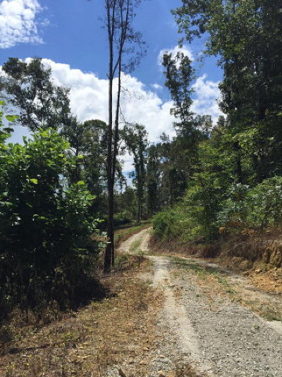 Cookeville Residential Lots & Land For Sale: Tract 2 Duncan Chapel Road