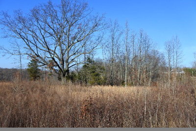 Cookeville Residential Lots & Land For Sale: 4874 Fox Knob Lane