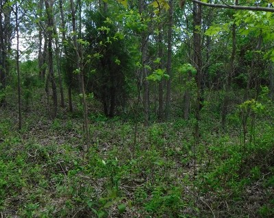 Allons Residential Lots & Land For Sale: Lot 32 Hidden Cove Lane