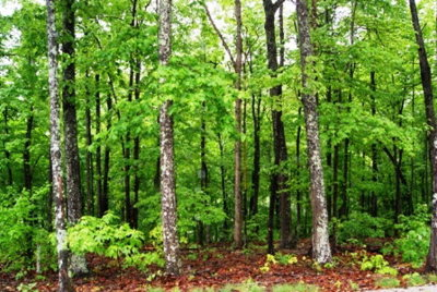 Allons Residential Lots & Land For Sale: 56-58 Northwest Pointe Trail