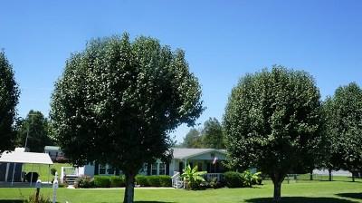 Crossville Single Family Home For Sale: 70 Gordon Road