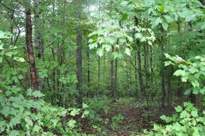 Residential Lots & Land For Sale: Lot 25 The Hollow