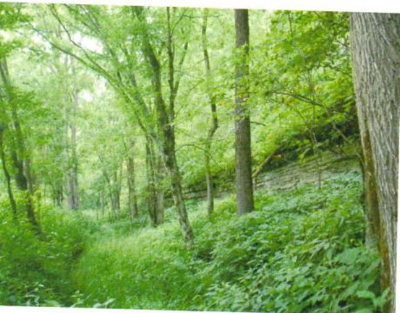 Residential Lots & Land For Sale: 308.71ac Brimstone Creek Road