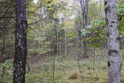 Cookeville TN Residential Lots & Land For Sale: $80,000