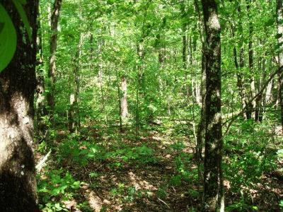 Putnam County Residential Lots & Land For Sale: 24&25 Sawmill Road