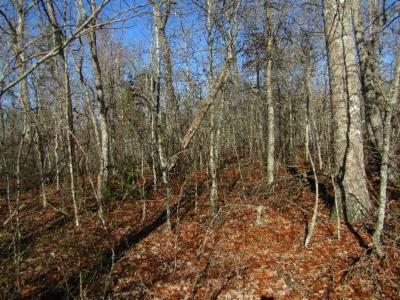 Cumberalnd Cove, Cumberland Cove, Cumberland Cove ., Cumberland Cove, A Vast Wooded Subdivision On The Plateau Between Cookeville And, Cumberland Cove Iv, Cumberland Cove Unit, Cumberland Cove Unit 2, Cumberland Cove Unit Lii Residential Lots & Land For Sale: Lot 18 N. Laurel Loop