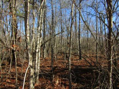 Cumberalnd Cove, Cumberland Cove, Cumberland Cove ., Cumberland Cove, A Vast Wooded Subdivision On The Plateau Between Cookeville And, Cumberland Cove Iv, Cumberland Cove Unit, Cumberland Cove Unit 2, Cumberland Cove Unit Lii Residential Lots & Land For Sale: Lot 19 N. Laurel Loop