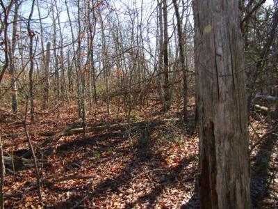 Cumberalnd Cove, Cumberland Cove, Cumberland Cove ., Cumberland Cove, A Vast Wooded Subdivision On The Plateau Between Cookeville And, Cumberland Cove Iv, Cumberland Cove Unit, Cumberland Cove Unit 2, Cumberland Cove Unit Lii Residential Lots & Land For Sale: Lot 20 N. Laurel Loop