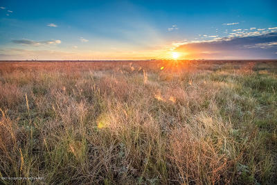 Amarillo Residential Lots & Land For Sale: Hill Rd +/-13.68 Acres