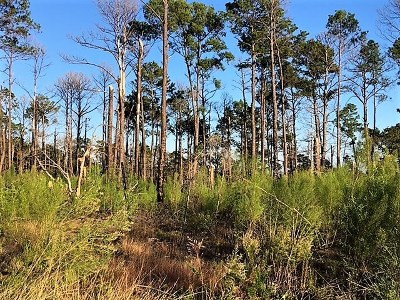 Smithville Residential Lots & Land For Sale: Old Antioch Rd
