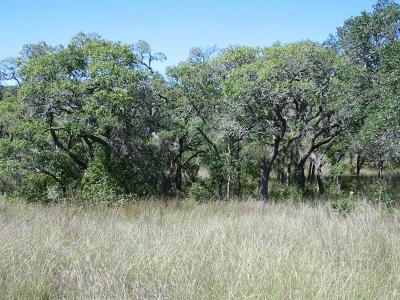 Farm For Sale: 3579 N Us 281 Hwy #Lot 5