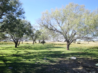 Farm For Sale: Fm 963
